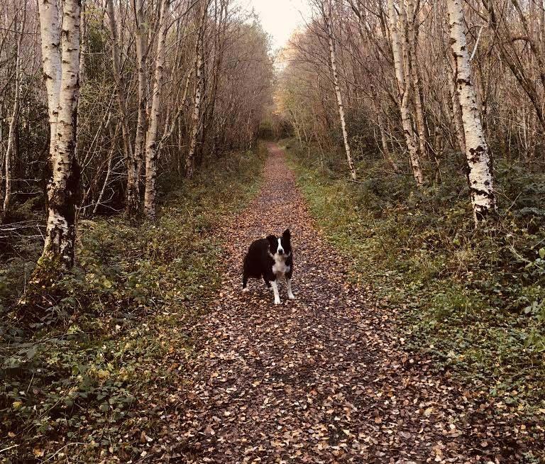 Brackloon Wood Walk