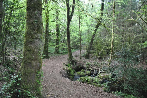 Cong Forest Nature Trail