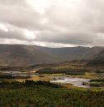 Letterkeen Woods