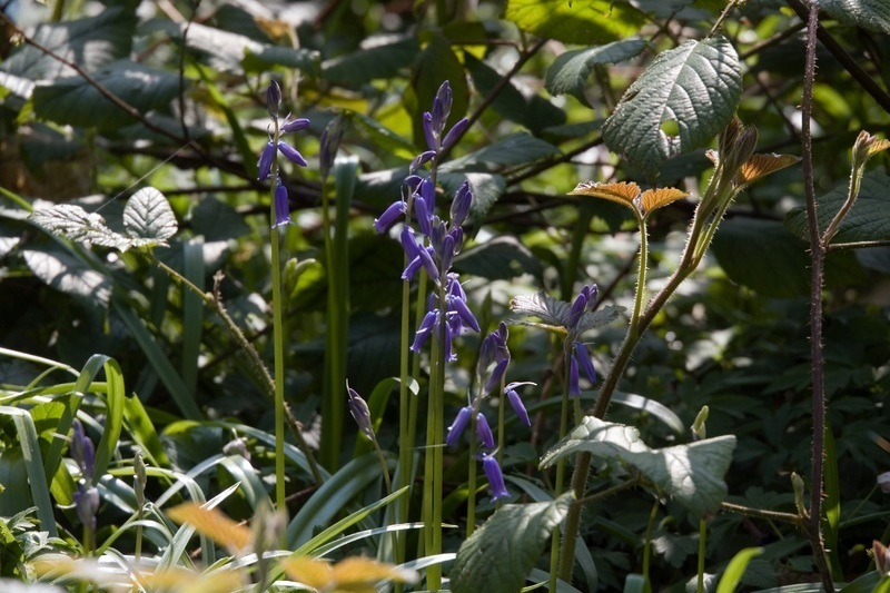 5 Wildflowers To Find In Westport's Hedgerows Right Now