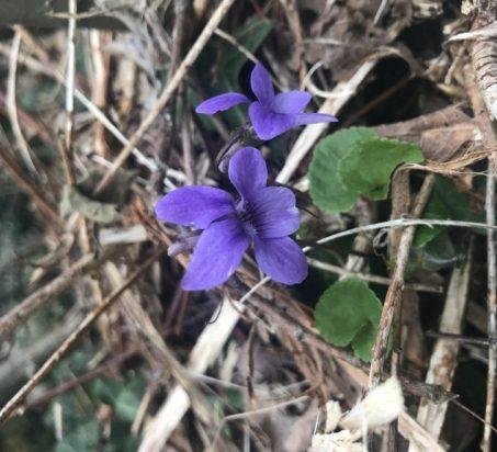 5 Wildflowers In Westport  - Destination Westport