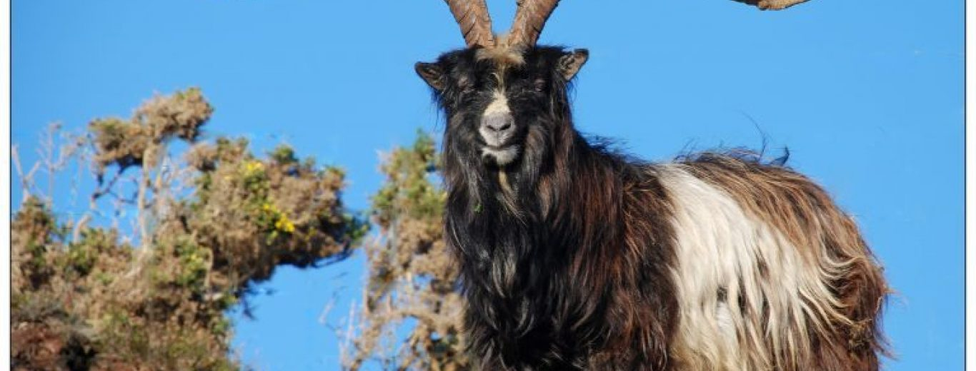 Rare   Wildlife to Watch out for in Mayo - Destination Westport